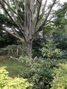 4-mount-usher-gardens-trad