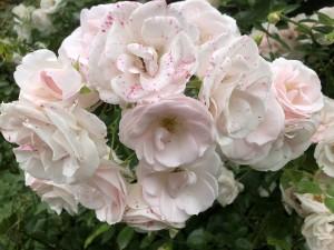6-mount-usher-gardens-ros